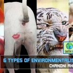 6 Types of Environmentalists: Which one are you?
