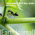 THESE 13 ANT FACTS WILL BLOW YOUR MIND!