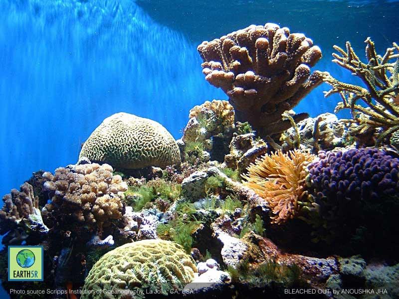 Coral-Bleaching-Anoushka-Jha-Earth5R