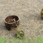 Religious Waste Near Powai Lake – Why Does it Matter?