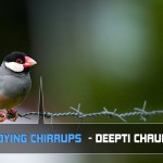 THE DYING CHIRRUPS