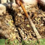 DISPOSING TO COMPOSTING