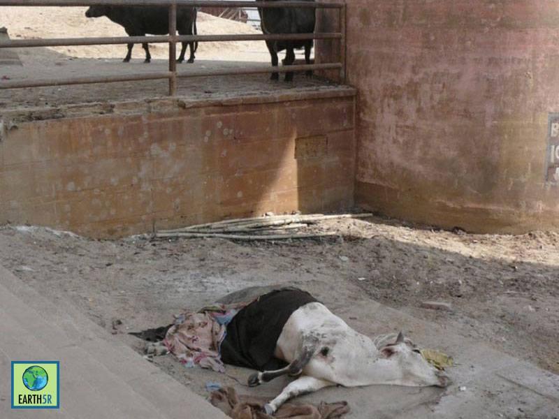 Awareness Upcycling Ganga Varanasi Mumbai India Environmental NGO Earth5R