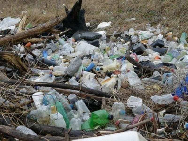 Cardiff Circular Economy Litter Pollution Mumbai India Evironmental NGO Earth5R