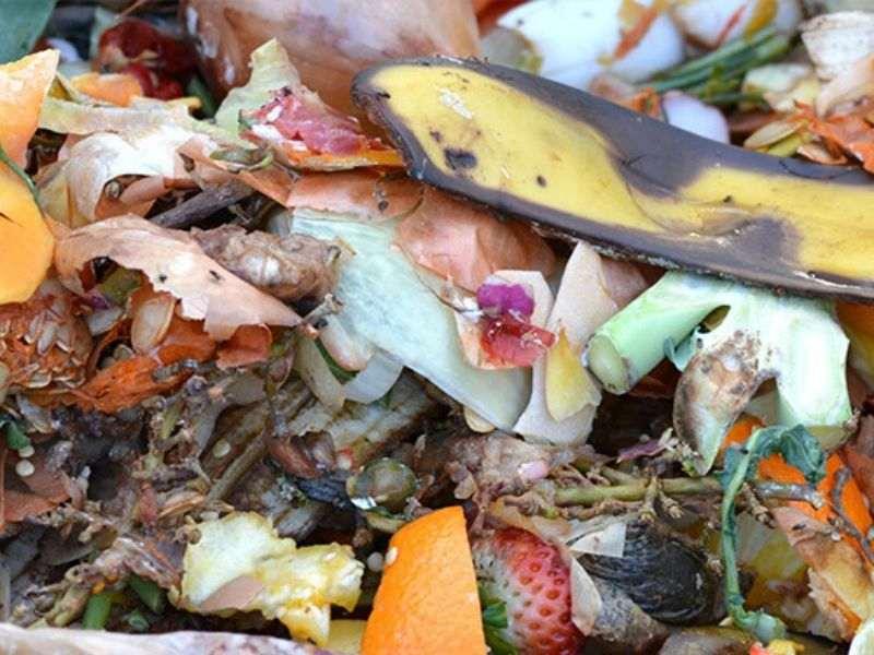 Food Waste Bangkok Circular Economy Mumbai India Environmental NGO Earth5R