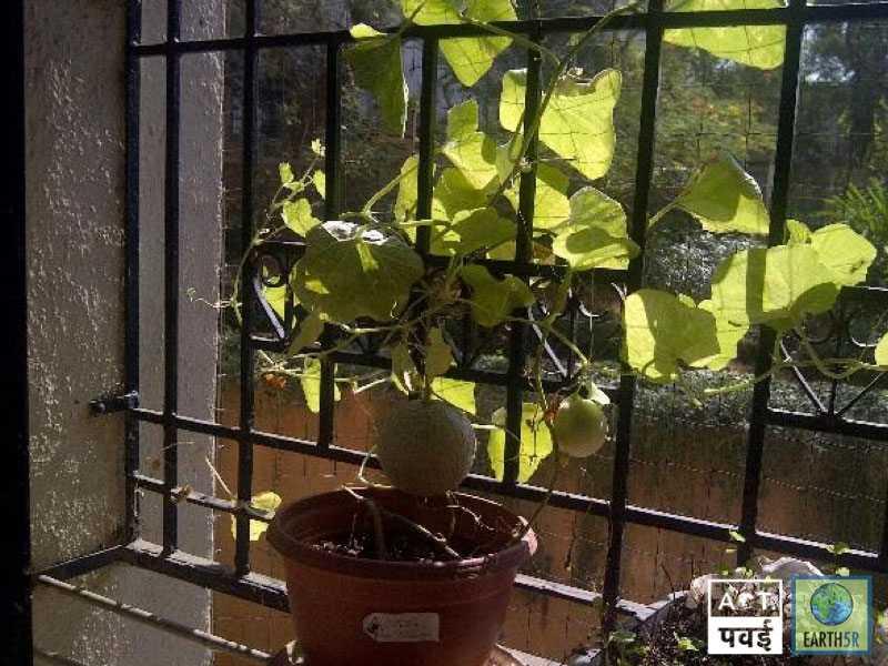 Sudha Bhujle Environmentalist Earth5R Gardening Mumbai India Environmental NGO