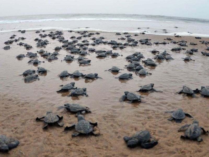 Impacts of covid19 on environment flourishing wildlife species  Mumbai India Environmental NGO Earth5R
