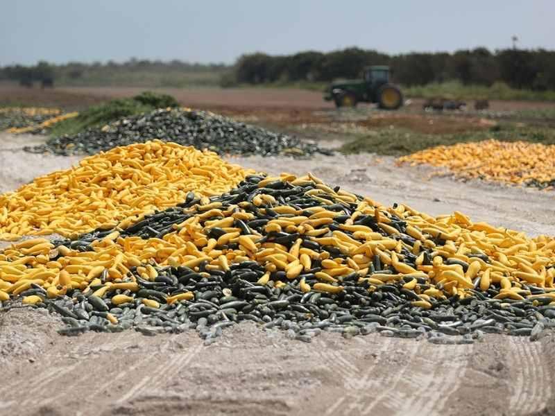 Impacts of covid19 on environment organic waste Mumbai India Environmental NGO Earth5R