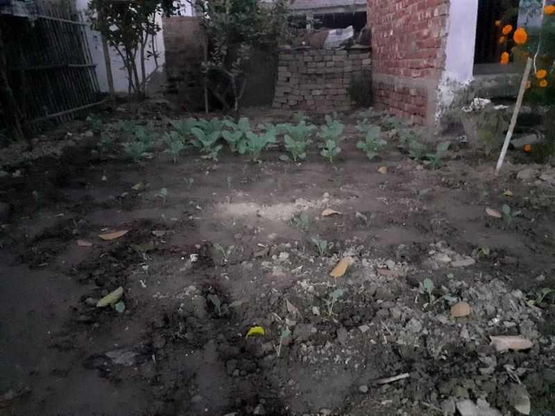 Mumbai-India-Environmental-NGO-Earth5r-Circular-Economy-garden