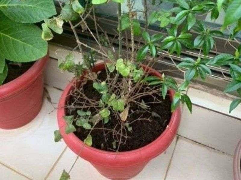Mumbai-India-Environmental-NGO-Earth5r-home-equals-planet-garden