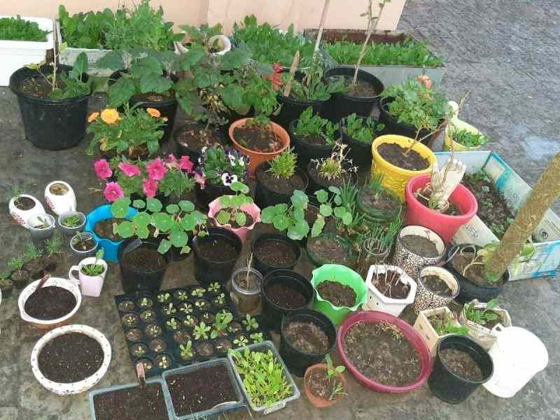Mumbai-India-Environmental-NGO-Earth5r-plants