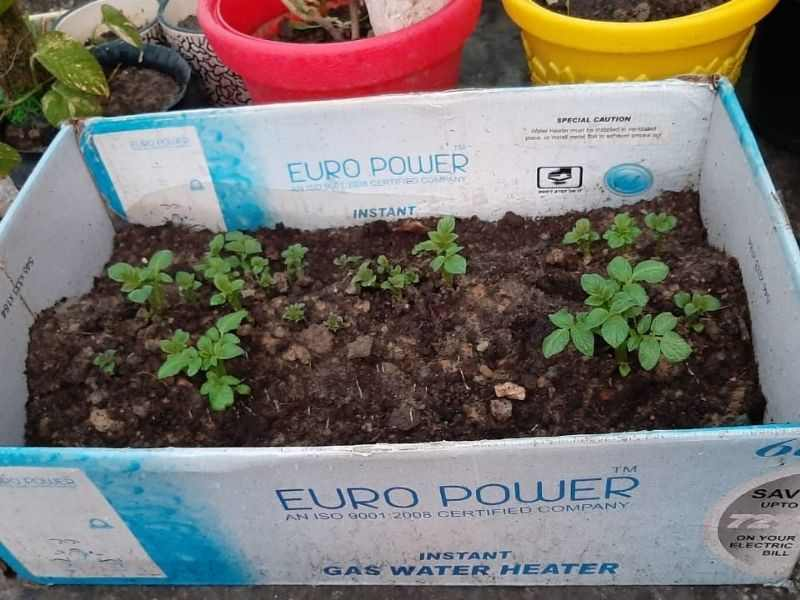 Mumbai-India-Environmental-NGO-Earth5r-potato