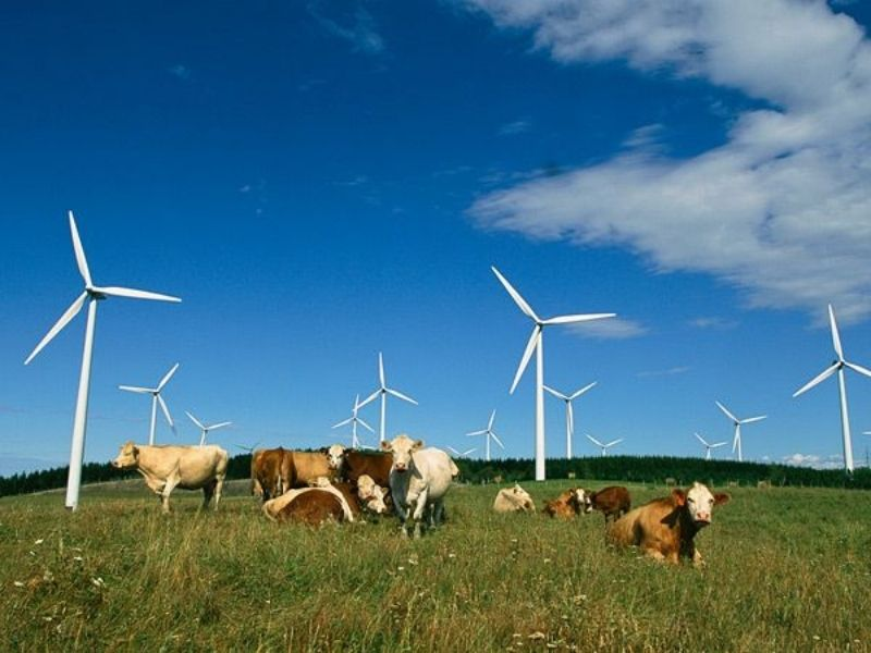 Mumbai-India-Environmental-NGO-Earth5R-Circular-Economy-wind-turbine